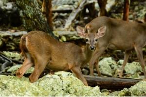 La vida salvaje de Yucatán